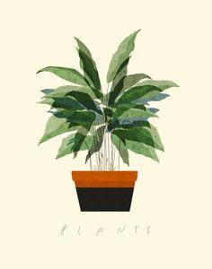 Planten en Illustraties - Plant illustration by Dadu Shin - Meer planteninspiratie op www.mooiwatplantendoen.nl