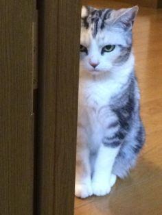怒ってる…! 完全に怒ってる…!! She is angry...(-_-;...