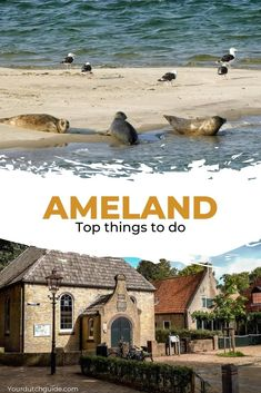 Ameland, The Netherlands. The ultimate list of things to do on Ameland island, The Netherlands | Your Dutch Guide Stuff To Do, Things To Do, Beautiful Islands, Places To See, Netherlands, The Good Place, Travel Inspiration, Dutch, Europe