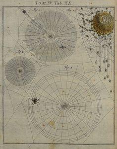 Spider webs - peacay, via Flickr
