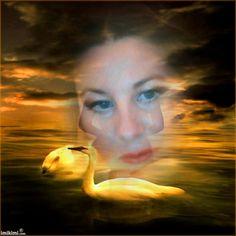 dvc swan lake sunset
