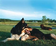 """Best Guard Dog for Your Homestead""""You want a dog that will pick up on unusual things and then discriminate as to what's unusual,"""""""