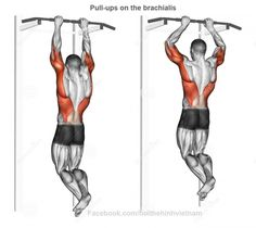 Pull-ups on the brachialis. Pull-ups on the brachialis. Exercising for bodybuilding Target muscles are marked in red stock illustration Body Training, Weight Training Workouts, Gym Workout Tips, Workout Kettlebell, Workout Fitness, Cable Workout, Sport Fitness, Muscle Fitness, Fitness Tips