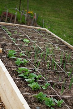 Growing Vegetables in Small Spaces | Halifax Seed