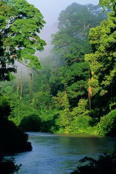 'River in lowland rainforest, Danum Valley, Sabah, Borneo' by Danita Delimont Places To Travel, Places To See, Beautiful World, Beautiful Places, Wonderful Places, Borneo Travel, Borneo Rainforest, Malaysia Travel Guide, Landscape Photography