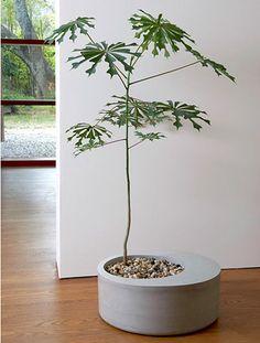 offset concrete planter