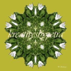 Mandala ''Glockenblume''  kreativesbypetra  #mandala #mandalas #mandalaart #mandalastyle #inspiration #innereruhe #glockenblume #bellflower Mandala Art, Petra, Christmas Ornaments, Holiday Decor, Mandalas, Mosaics, Canvas, Christmas Jewelry, Christmas Decorations