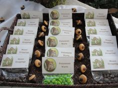 Gruffalo First Birthday Party Food and Drink Ideas - my tortoise mind First Birthday Party Themes, Fairy Birthday Party, 3rd Birthday, Birthday Ideas, Happy Birthday, Gruffalo Party, The Gruffalo, Gruffalo Activities, Easy Party Food