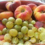Wilde perziken kruisbessen jam zonder suiker
