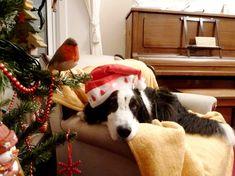 strGk 15 Most Beautiful Christmas Dog Photos
