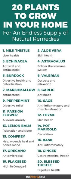 Do you love natural remedies? Between the best indoor plants and the best outdoor ones, here are the best ones for making plant medicine!#plants #medicine #naturalremedies #healthbenefits
