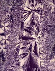 Laure Albin-Guillot Micrographie décorative 1931 7