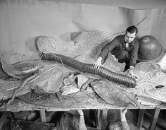 Museum staff installing models in The Forest Floor display. March, 1958. American Museum of Natural History