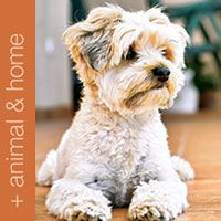 Aloe products for your pets large and small. Domestic and farm animals. http://www.honeybee.myforever.biz