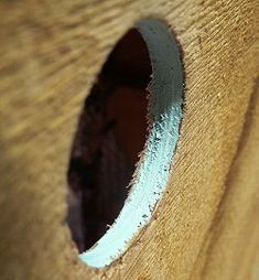 Building A Birdhouse? Here's How To Make The Right Size Hole