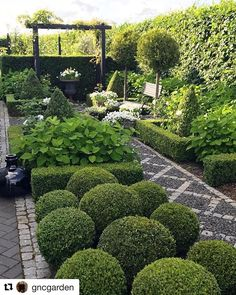 Love this courtyard garden thanks @gncgarden for posting! #Repost @gncgarden (@get_repost) ・・・ The boxwoods balls and hedges all trimmed ✂️✂️ . #boxwood #summerishere
