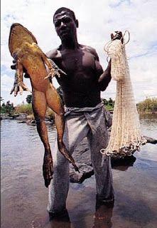 A VOZ DA SELVA AMAZÔNICA: O SAPO GIGANTE Certa vez, conheci uma região do Amazonas, que nunca conhecera a companhia humana. Distante da cidade, longe do homem, totalmente isolada do mundo, essa região chamada Miri, tem uma fauna riquíssima....