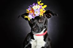 Gorgeous Photo Series Helps Often-Overlooked Black Dogs Get Adopted