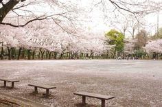 7:「広場を見渡すベンチ」@林試の森公園