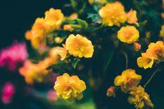 Orange flowers Photography Flowers photo Bedroom decor