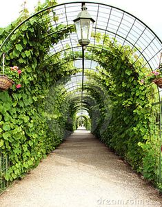 Vine Arbor Tunnel. Mmmm!? Good idea for growing curcubits, pole beans etc........ and maybe passionfruit