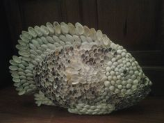 B side shell fish