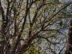 Plantar uma árvore é um ótimo jeito de contribuir para a manutenção ambiental da cidade e para a biodiversidade.