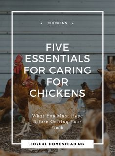 Caring for chickens is not nearly as complicated as you think. In fact it is one of the easiest ways to pursue self-sufficient living.
