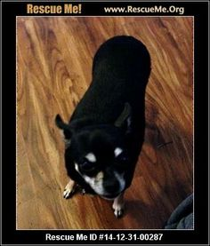 ― Illinois Chihuahua Rescue ― ADOPTIONS ―RescueMe.Org