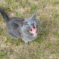 He's vicious!