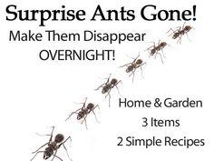 ants-gone-overnight-HG