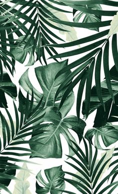 Tropical Jungle Leaves Pattern Window Curtains to wallpaper around windows Art Prints Leaves Wallpaper Iphone, Plant Wallpaper, Tropical Wallpaper, Pattern Wallpaper Iphone, Windows Wallpaper, Wallpaper Patterns, Summer Wallpaper, Green Wallpaper, Trendy Wallpaper