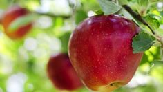"""2013's Updated """"Dirty Dozen"""" produce list and """"Clean List"""""""