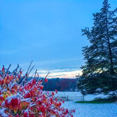 First snow 2014 in Lincoln, Massachusetts