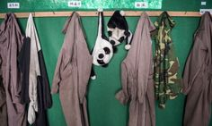 Panda costumes hang at the Wolong National Nature Reserve. Photo by Ami Vitale.