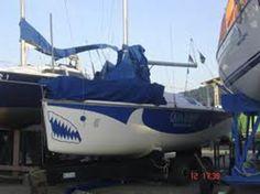 Adesivo Tubarão Branco