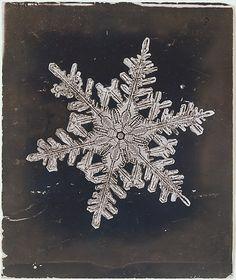 Wilson Alwyn Bentley (American, 1865–1931). [Snow Crystal], ca. 1910. The Metropolitan Museum of Art, New York. Purchase, Gifts in memory of Josh Rosenthal, 2005 (2005.55.3) #snowflake