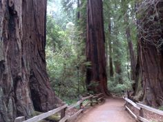 Muir Woods National Monument in Mill Valley, CA