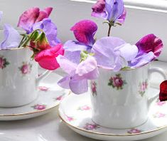 rosy cups