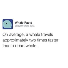 Whale facts | Funny and random and fandoms | Pinterest | Whale ...