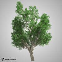 free broadleaf tree 3d model