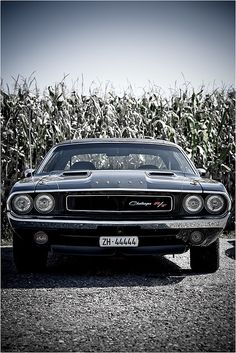 I love American Muscle Cars. Dodge Challenger, chosen at the time as the best muscle car history ! Dodge Cummins, Dodge Trucks, Mopar Jeep, Lifted Trucks, Dodge Challenger, American Muscle Cars, Us Cars, Sport Cars, Cars Vintage