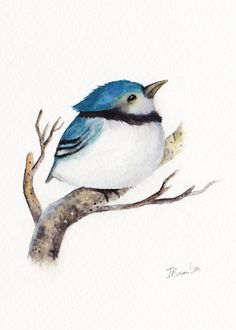 Baby Blue Jay Print of Original watercolor painting, 5x7 Inches, Bird Art