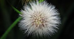 Weed Appreciation Day is tomorrow. If it was really spring out there, I'd say pick a dandelion to celebrate