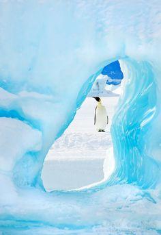 "Emperor penguin framed by an iceberg in Antarctica. ""I've been framed!"" by David C. Schultz"