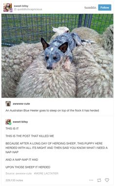 29 Times Tumblr Just Couldn't Take Australian Animals Seriously
