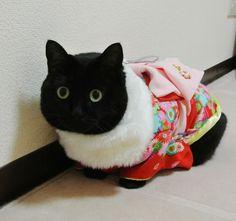 ぽんこ0823さんちの愛猫ぽんこ