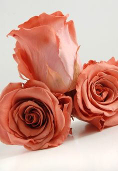 Original always is better Rosas Color Coral, Coral Roses, Clay Flowers, Sugar Flowers, Crepe Paper Flowers, Fabric Flowers, Pale Dogwood, Shades Of Peach, Cold Porcelain