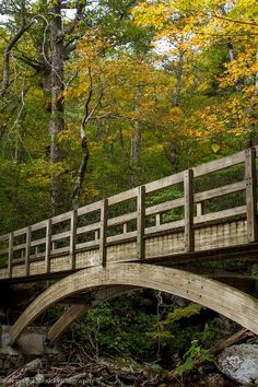 Great wooden Bridge in North Carolina. Go to www.YourTravelVideos.com or just click on photo for home videos and much more on sites like this.