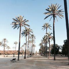 Buenos dias! Przesyłam dużo energii na początek tygodnia i życzę cudownego poniedziałku! Dzisiaj czas na Sevillę #palmas #summer #sun #amazing #jerezdelafrontera #cadiz #andalucia #sevilla